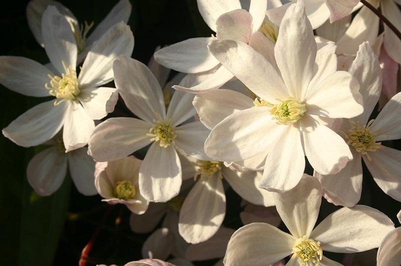 Nettlestead care home flowers